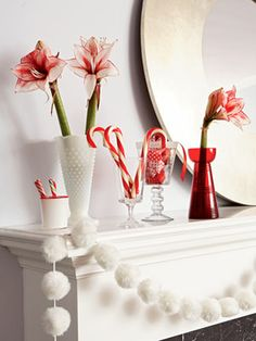 fuzzy pom-poms and vases of amaryllis #holiday #decor