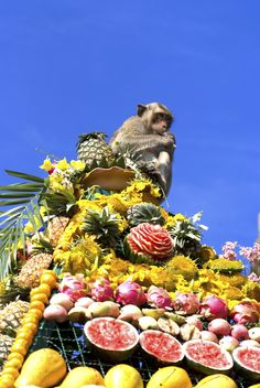 Lopburi Monkey Festival