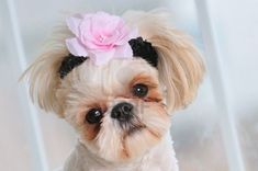 holy cute