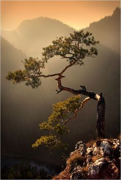 Ideas For Bonsai Tree Photography Beautiful Forest Photography, World Photography, Landscape Photography, Photography Tips, Hiking Photography, Ocean Photography, Aerial Photography, Night Photography, Landscape Photos