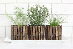 15 Ideas para decorar nuestra casa con plantas, cactus y crasas | Decoración