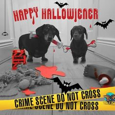 Happy Hallowiener  from Ollie & Penny! #zombiecrimescene #halloweiner #halloween #dogs . . Get 10% OFF any subscription for @fetch_hq with our code OLLIEANDPENNY on www.fetchhq.com (link in bio!)