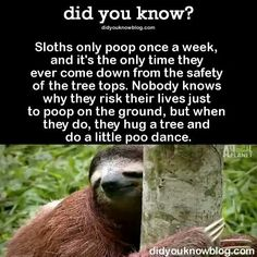Sloths only poops once a week!?! Haha!