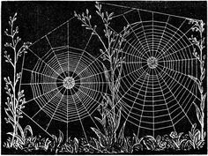 Vintage Ephemera: Illustration, Web of Epeira strix, an Orb-weaving Spider, 1915 Spider Art, Spider Webs, Spider Book, Art Halloween, Charlottes Web, Art Prints For Sale, New Energy, Hipsters, Vintage Ephemera