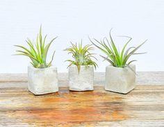 Ciment porte plante dAir affichage de par BehindThePinesStudio