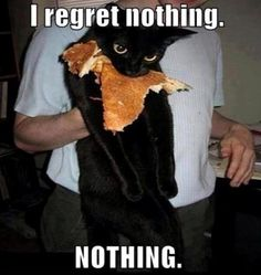 this is my cat...she never regrets anything. ughhh