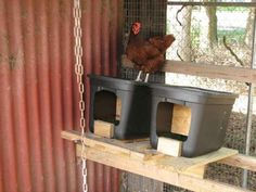 #Homestead - Roll away nest boxes - plastic bins with partition, clean eggs and no eating!