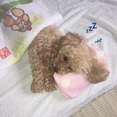 . たくさん寝た気がしたんだけど ほんとに、気がしただけなのか、眠ーー。目が疲れてるー。 コーヒー飲んだけど眠い。 目が覚めない。ボーーッ🙄💭 サーティーワンのアイス食べたっいっ!🍦❤️💜 #過去pic#愛犬#トイプードル#トイプー#タイニープードル#犬#トイプードル部#toypoodle#tinypoodle#landscape#dog#sleppydog#disney#selfie#poodle#scenery#view#pet#instapic#like4like#likeforlikes#camera#instagood#instalike#instagram#l4l#むぎ日記#写真 #ファインダー越しの私の世界