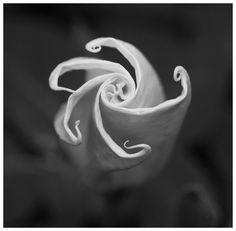 Moon Flower // ph. Robert Hambrick