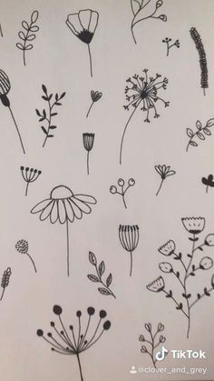 Doodle Drawings, Art Drawings Sketches, Easy Drawings, Plant Sketches, Flower Line Drawings, Botanical Line Drawing, Drawing Flowers, Wildflower Drawing, Illustration Blume