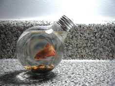 Repurposed or Recycled Project -Repurposed light bulb fish tank, vase, oil… Light Bulb Fish, Light Bulb Crafts, Bulb Vase, Beta Fish, Beta Beta, Trash To Treasure, Home Decor Trends, Repurposed, Fish Tanks