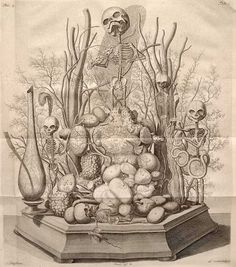 This illustration shows the tiny scenes created by the anatomist Frederick Ruysch (1638 - 1731) which were included in his cabinet of curiosities. Ruysch's museum displayed body parts and preserved organs alongside exotic birds, butterflies and plants. His daughter prepared delicate cuffs or collars to be slipped on to dead arms and necks. Small skeletons were positioned crying into handkerchiefs, wearing strings of pearls, or playing the violin. The scenes were intended to work like plays.