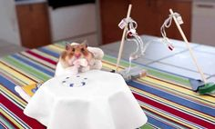 Tiny Burritos Eaten By Tiny Hamster | http://www.hashslush.com/tiny-burritos-eaten-tiny-hamster/ | #NEWS