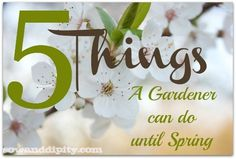 5 things a gardener can do until spring