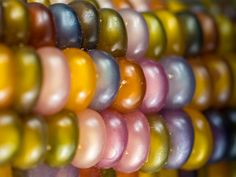 Browse our large selection of flower seeds for all types of climates. Shop online for flower seeds in every variety from Baker Creek Heirloom Seeds. Glass Gem Corn, Glass Beads, Farm Gardens, Outdoor Gardens, Flint Corn, Garden Seeds, Lawn And Garden, Herb Garden, Vegetable Garden