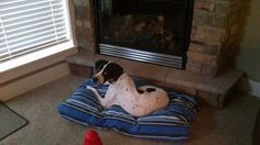 No sew dog bed (just an old comforter and a fleece blanket).