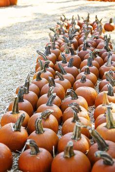 Looking ahead to weekend pumpkin picking!
