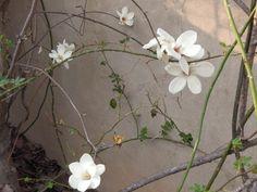 새 봄의 우리 화단 꽃