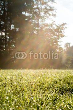 Frisse look Grasrijk gebied met zonnestralen