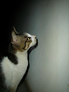Cat In The Dark (Stock Photo By riesp) [ID: 661178] - stock.xchng