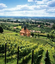 Care for a tour of one of the most beautiful wineries in Germany, Pillnitzer Königlicher Weinberg? Dresden, Wonderful Places, Beautiful Places, Amazing Places, Germany Travel, Travel Europe, Travel Destinations, Best Cities, Wonders Of The World