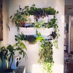 Woolly Pocket Gardening Company | Apartment Therapy, Apartments And Gardens