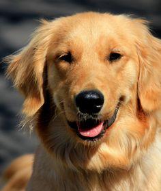 Reading dogs: Friendly dogs Dog Body Language, Dog Behavior, Dog Friends, Pets, Reading, Animals, Fluffy Animals, Animales, Animaux