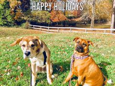 Happy holidays from my derpy puppies! http://ift.tt/2hMpRuE