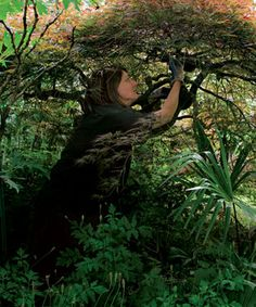 Learn how to prune Japanese maples in this article from Fine Gardening. The right cuts reveal a branch pattern that looks good with leaves or without. Pruning Shrubs, Garden Shrubs, Garden Plants, Shade Garden, Pruning Climbing Roses, Pruning Roses, Fine Gardening, Gardening Tips, Organic Gardening