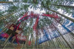 Treetop Nets | Gallery | ZipWorld