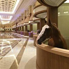 The world's most luxurious horse stables in Dubai