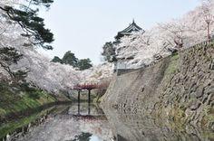 """4月23日~5月6日まで『弘前さくらまつり』で日本最古のソメイヨシノを含む2,600本以上の桜が咲き誇る、青森県で。4-gatsu 23-nichi ~ 5-gatsu muika made """"Hirosaki sakura matsuri"""" de Nihon saiko no someiyoshino wo fukumu 2.600 hon ijou no sakura ga saki hokoru, Aomori-ken de. Dari tanggal 23 April ~ 6 Mei di """"Festival sakura Hirosaki"""" 2.600 batang lebih pohon sakura yang meliputi someiyoshino tertua di Jepang, mekar sempurna, di Aomori."""