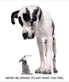 tiny dog: fuck you
