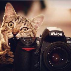 crazy rabid camera-eating cat