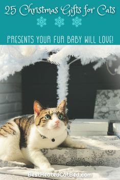 It's hard to believe, but the holiday shopping season is here. As you pick out presents for family and friends, remember to include your favorite feline on your gift-giving list. If you are stumped for what to get your kitty this year, we can help! We have rounded up the best Christmas gifts for cats so you can spoil your kitten this holiday season. Heated Cat House, Heated Outdoor Cat House, Heated Cat Bed, Christmas Ties, Best Christmas Gifts, Holiday, Cat Backpack Carrier, Cat Presents, Heating Pads