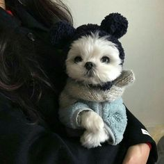 Cute Baby Dogs, Cute Dogs And Puppies, Doggies, Cute Little Animals, Cute Funny Animals, Pet Costumes, Cute Animal Pictures, Cute Creatures, Animals And Pets