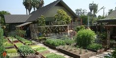 family produces 6000 pounds of food, growing food on acre of land, high yield urban farming, los The Farm, Small Farm, Farm Gardens, Outdoor Gardens, Homestead Farm, Urban Homesteading, Urban Farming, Edible Garden, Organic Gardening
