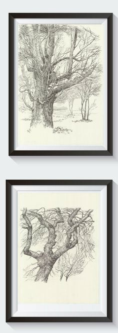 Look at my original Tree drawings made with pen on paper. Detailed Forest landscape is perfect home decor. Every tree study is unique. This is beautiful nature drawing.