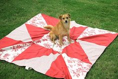 Stella tests out a new picnic blanket