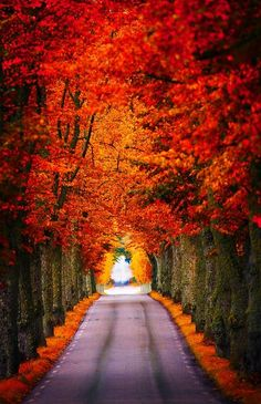 ~~Fall is here ~ autumn in Husby, Sodermanland, Sweden by Pierre Pocs~~ Beautiful World, Beautiful Places, Beautiful Pictures, Beautiful Roads, Beautiful Scenery, Simply Beautiful, Absolutely Gorgeous, Fall Is Here, All Nature