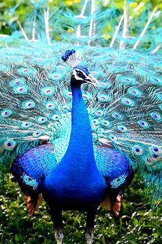Good Morning Beautiful Images, Most Beautiful Birds, Beautiful Nature Pictures, Beautiful Nature Wallpaper, Pretty Birds, Wild Animals Videos, Wild Animals Pictures, Funny Animal Videos, Animal Pictures