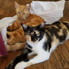 Snicker and Doodle. Available at me wow. Super affectionate! #cats #adoptdontshop #catsofinstagram Instagram News, Cats Of Instagram, Adoption, Doodles, Animals, Foster Care Adoption, Animales, Animaux, Animal