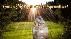 guten_morgen_murmeltier.gif (480×265)