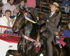 Carson Kressley won the American Saddlebred Horse Association Northeastern Regional Amateur Park Horse Championship in 2005 at the Pennsylvania National Horse Show.