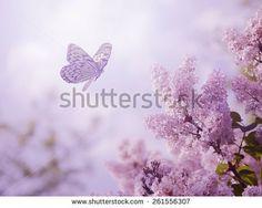 Стоковые фотографии и изображения бабочки | Shutterstock