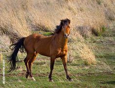 eastern washington  wild horse