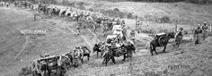 Artilleros, Selvas colombianas 1935 Fotografía: Tito Julio Celis
