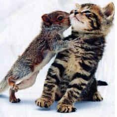 #amoranimal #fotografia #foto #animal #love