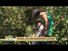 YouTube Permaculture, Mai, Youtube, Plant, Youtubers, Youtube Movies