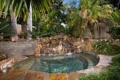 Tropical Swimming Pool with Adagio Dwarf Maiden Grass - Miscanthus sinensis 'Adagio', Fence, Royal Palm, Freeform Custom Pool